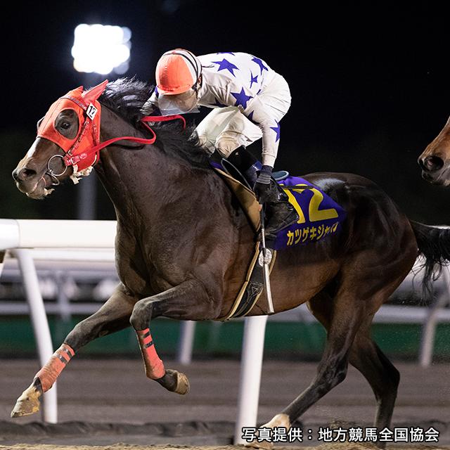 昨年優勝馬「カツゲキジャパン」